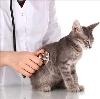 Ветеринарные клиники в Лотошино